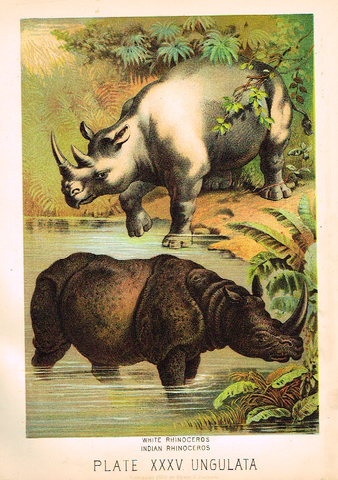 "Johnson's Animal Kingdom - ""RHINOCEROS"" - Chromo - 1880"