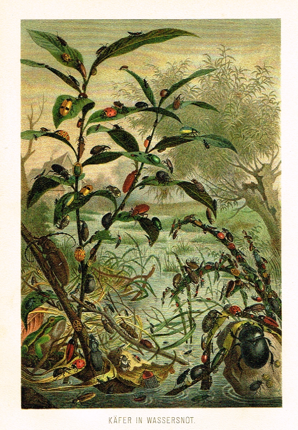 "Meyers' Lexicon - ""KAFER IN WASSERSNOT""- Insects  - Lithograph - c1890"