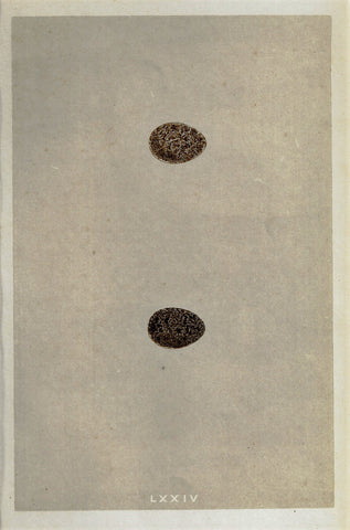 "Bird Eggs - ""CRESTED LARK"" - Hand Colored Wood Engraving - 1856"