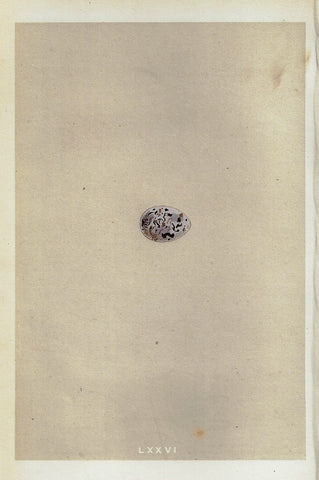 "Bird Eggs - ""BUNTING"" -  Colored Engraving - 1856"