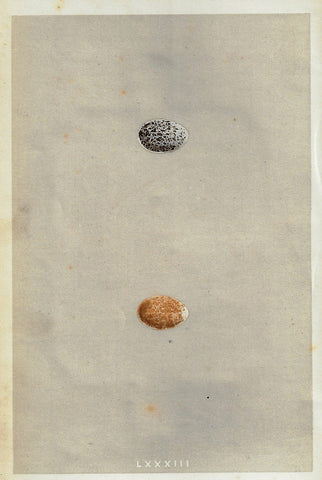 "Bird Eggs - ""RROW"" -  Colored Engraving - 1856"