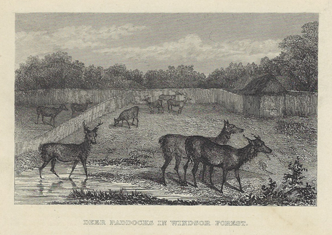 DEER PADDOCKS IN WINDSOR FOREST