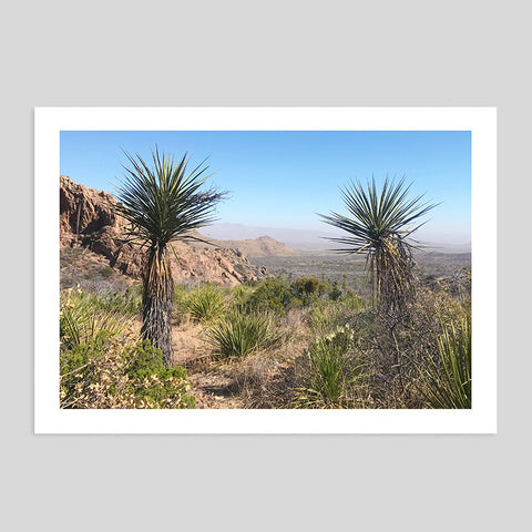 Palm Trees Big Bend Texas California Summer Desert Print Picture Mountains Home