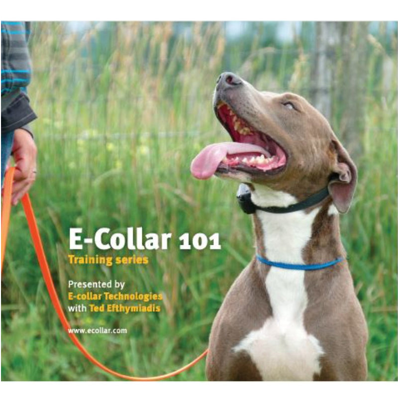 E-COLLAR 101 DVD | WorkingDogsDirect