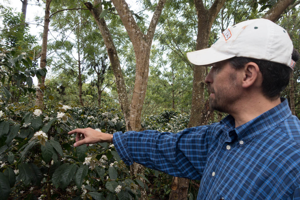 Meet the Producer Event June 7th, 2017: Victor Calderon of Finca El Tambor