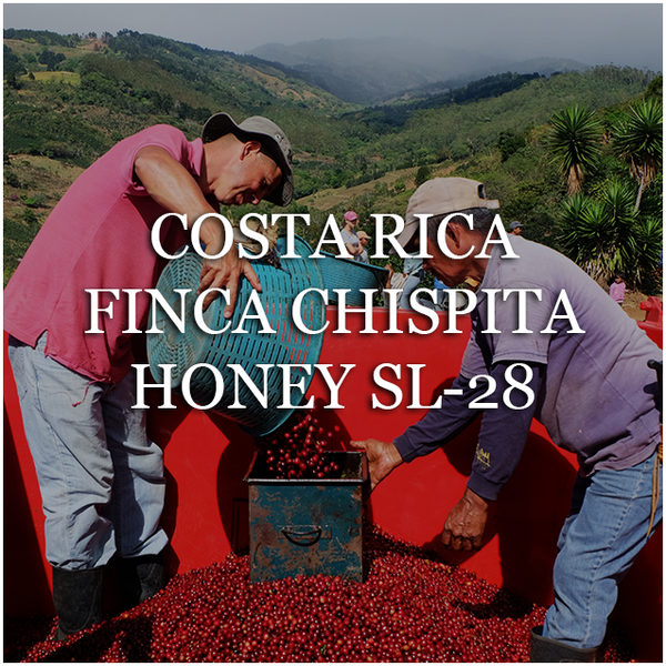 Costa Rica Finca Chispita Honey SL-28