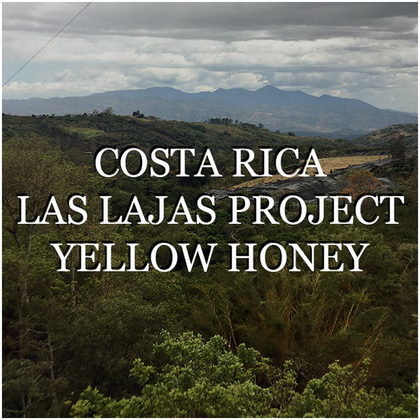 Costa Rica Las Lajas Yellow Honey - Wholesale