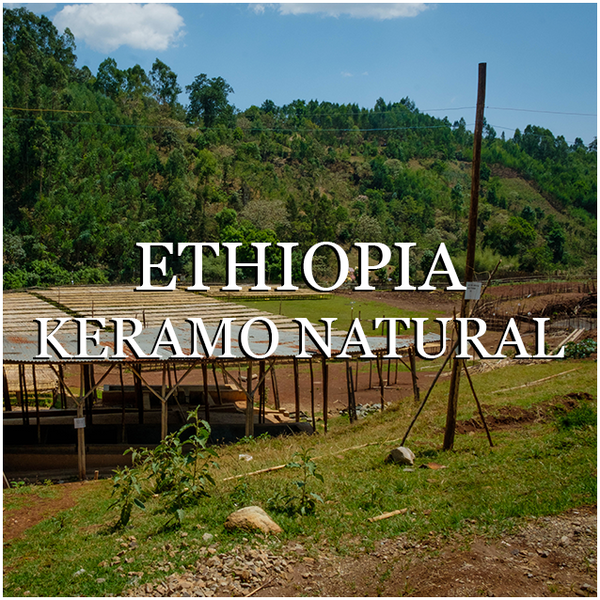 Ethiopia Keramo Natural - Wholesale