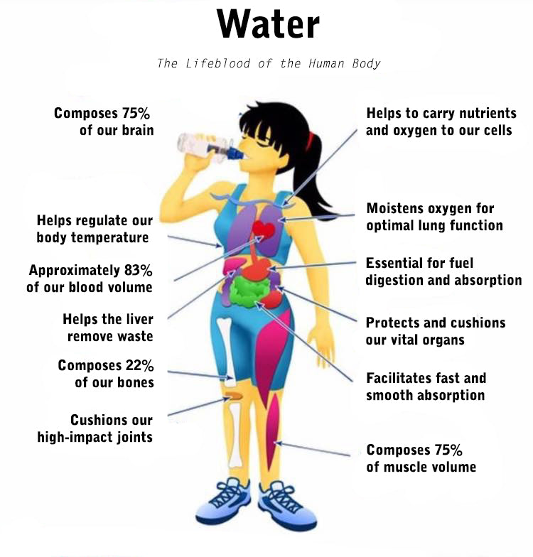 Sword Performance Human Body Diagram of Functions of Water