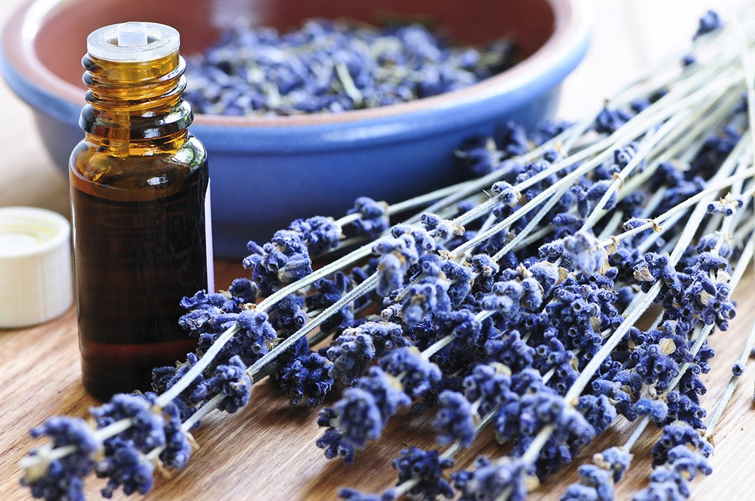 Top Ways to Use Lavender Essential Oil
