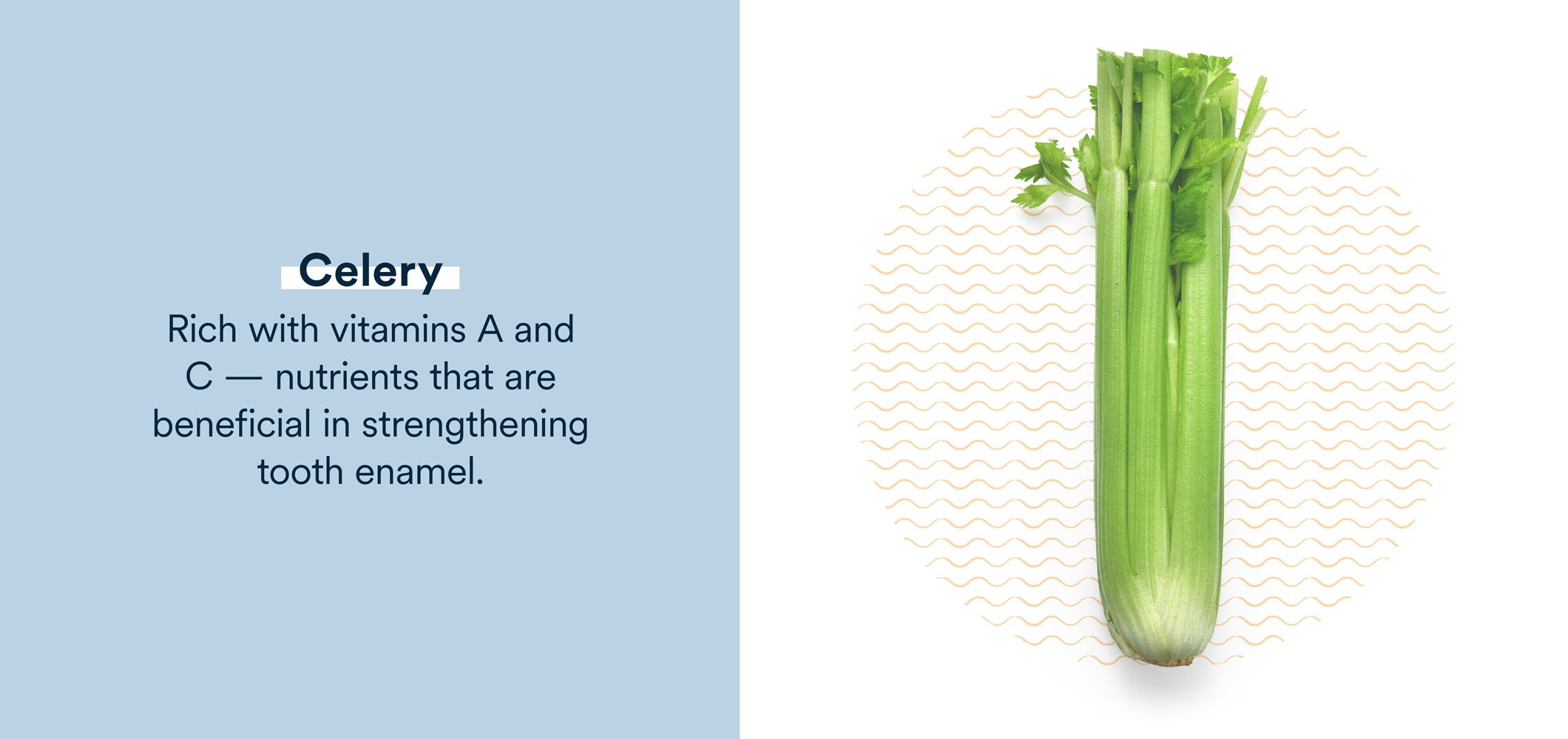 celery is rich in nutrients that can strengthen tooth enamel