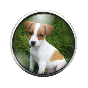 Dog - 18MM Glass Dome Candy Snap Charm GD0500