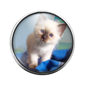 Cat- 18MM Glass Dome Candy Snap Charm GD1028