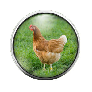 Chicken - 18MM Glass Dome Candy Snap Charm GD0503