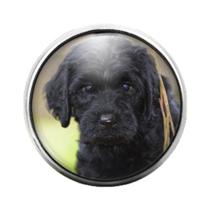Dog Labradoodle- 18MM Glass Dome Candy Snap Charm GD1079