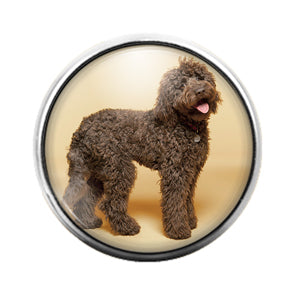 Dog Labradoodle- 18MM Glass Dome Candy Snap Charm GD1080