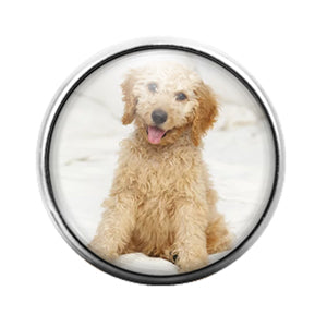Dog Labradoodle- 18MM Glass Dome Candy Snap Charm GD1081