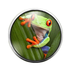 Frog - 18MM Glass Dome Candy Snap Charm GD0877