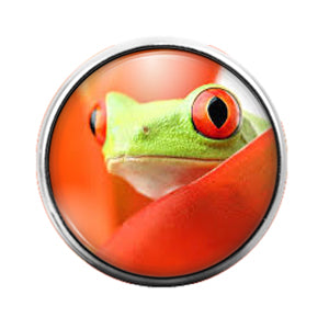 Frog - 18MM Glass Dome Candy Snap Charm GD0878