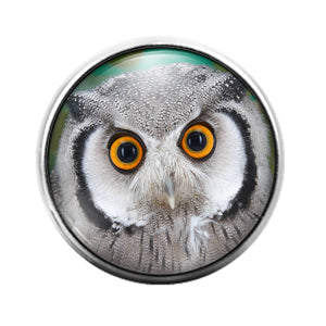 Owl Bird - 18MM Glass Dome Candy Snap Charm GD1467