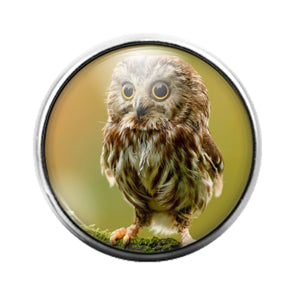 Owl Bird - 18MM Glass Dome Candy Snap Charm GD1468