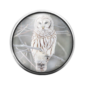 Owl Bird - 18MM Glass Dome Candy Snap Charm GD1470
