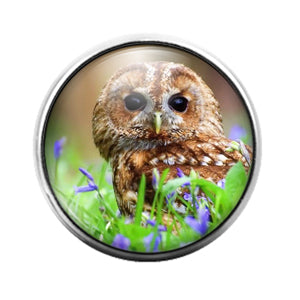 Owl Bird - 18MM Glass Dome Candy Snap Charm GD1471
