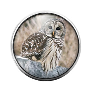 Owl Bird - 18MM Glass Dome Candy Snap Charm GD1472