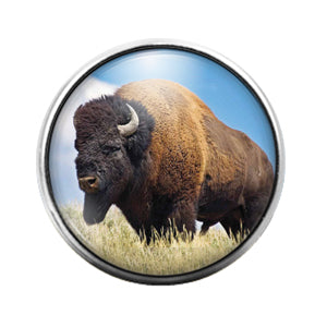 Buffalo- 18MM Glass Dome Candy Snap Charm GD1027
