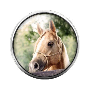 Horse - 18MM Glass Dome Candy Snap Charm GD0361