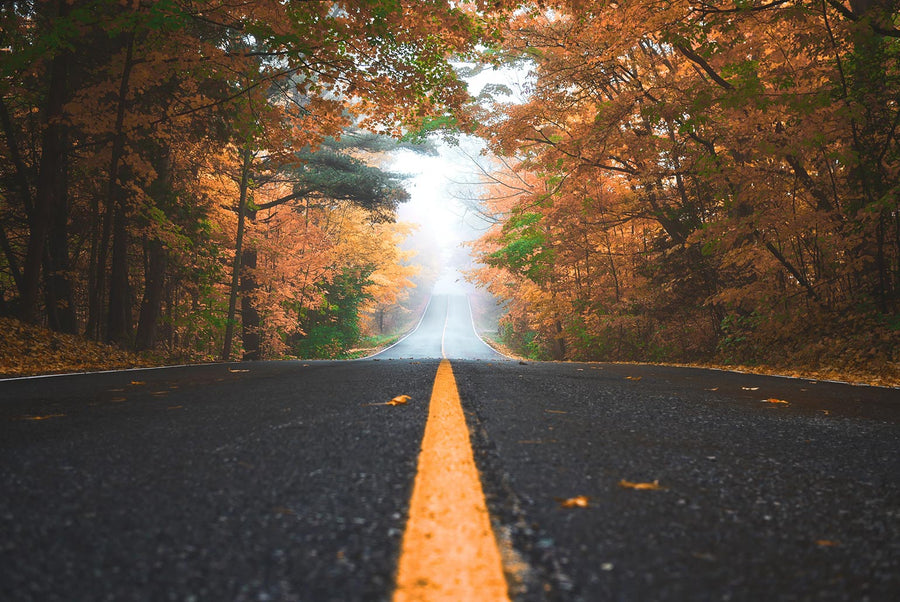 A photo of a road in autumn running through trees and fog. Photo by Patrick Tomasso on Unsplash.