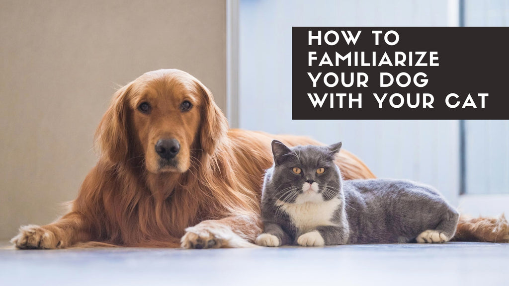 ViviPet | How to familiarize your dog with your cat