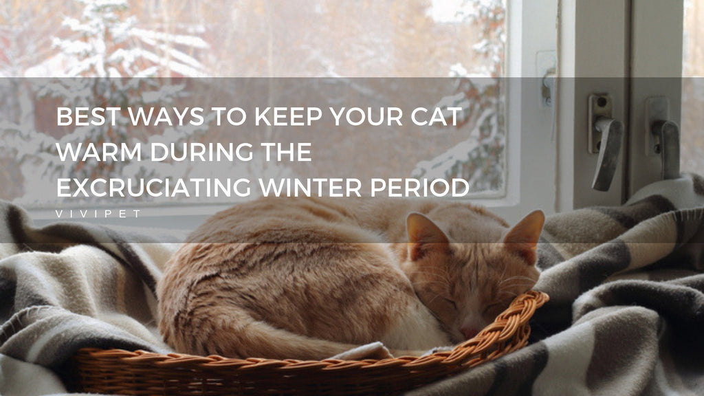 ViviPet | The Best Ways to Keep Your Cat Warm During the Excruciating Winter Period
