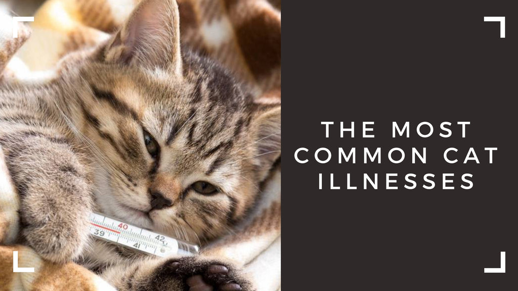 ViviPet | Most common cat illnesses pet parents should know