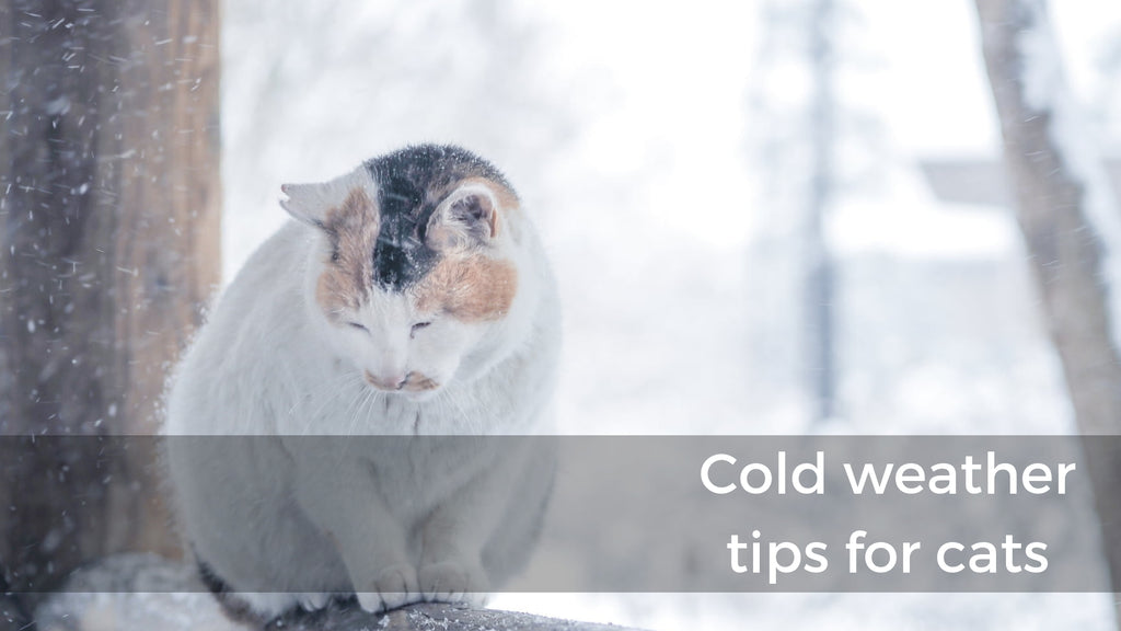 ViviPet | Cold Weather For Your Pets
