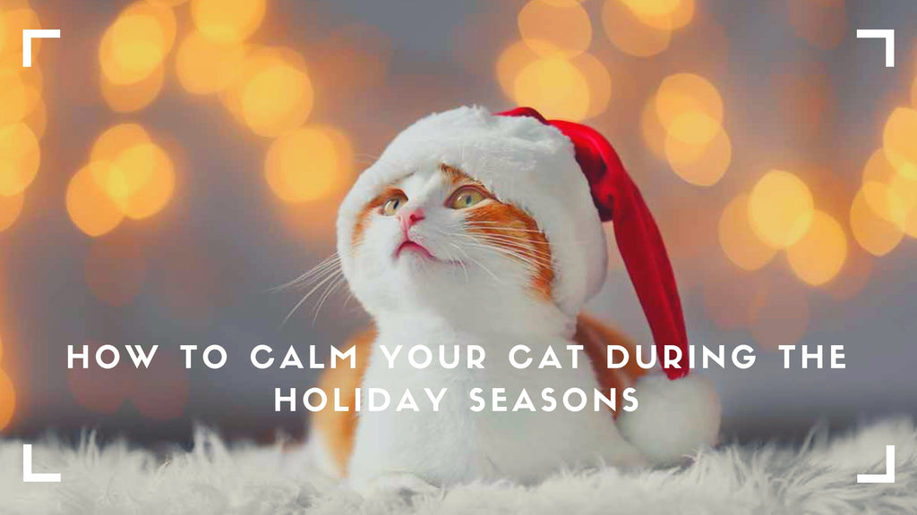 ViviPet | How to Calm Your Cat During the Holiday Seasons and Release the Cat's Stress