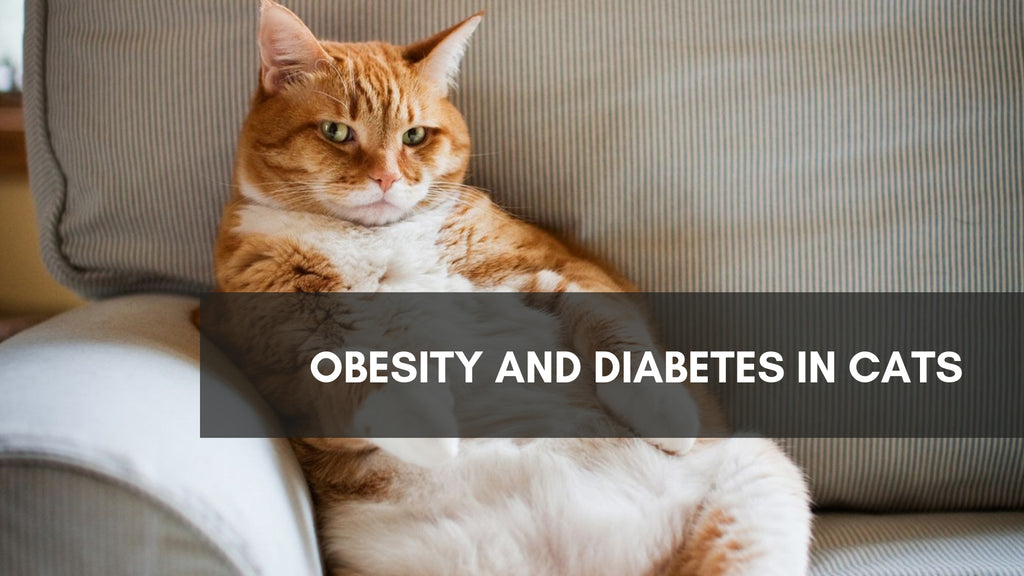 ViviPet | Diabetes in Cats