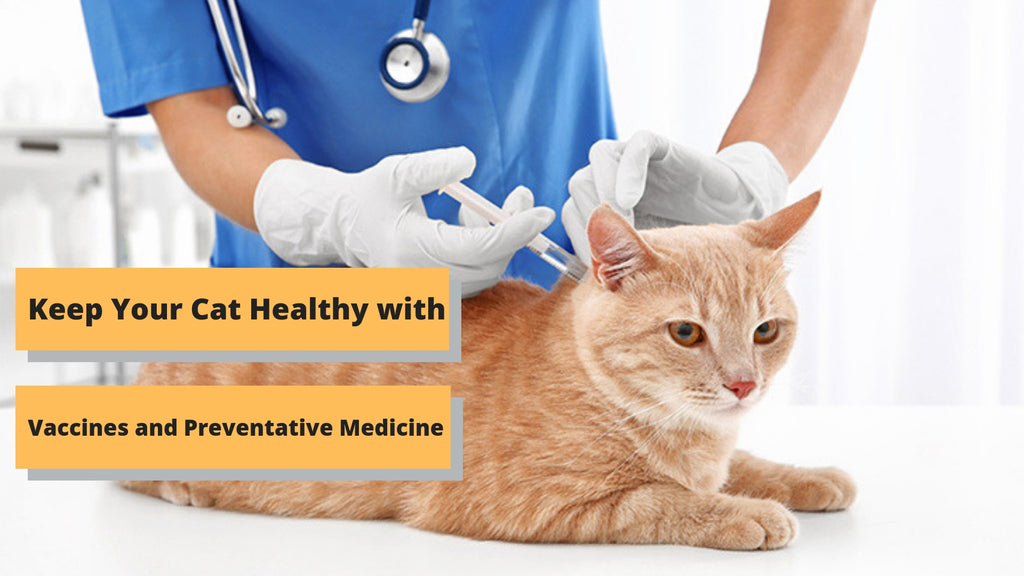 ViviPet | Keep Your Cat Healthy with Vaccines and Preventative Medicine