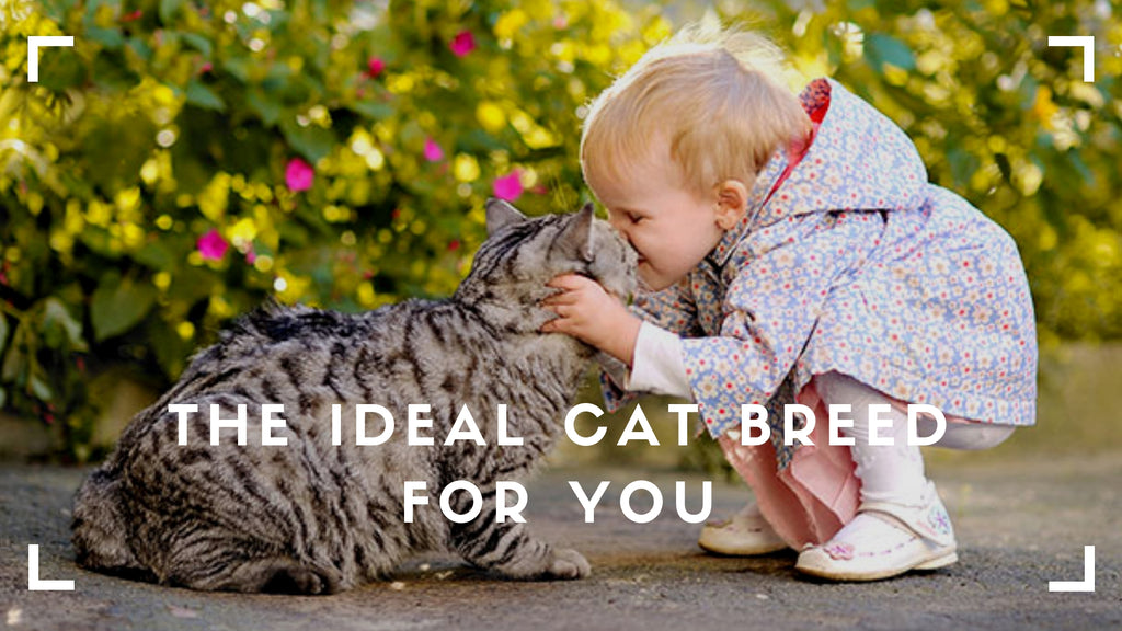 ViviPet | Finding the Perfect Cat for Your Life Stage