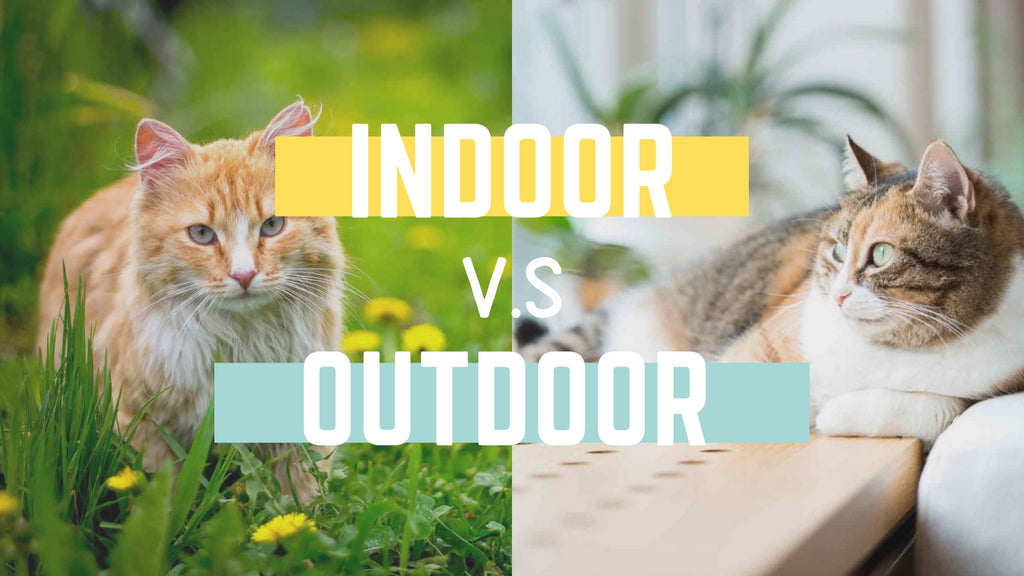 ViviPet | Indoor Vs. Outdoor Cats: Health and Safety