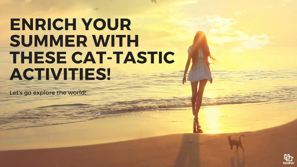 ViviPet | Enrich Your Summer with These Cat-tastic Activities!