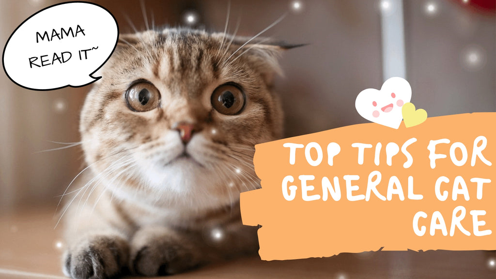 ViviPet | Top Tips for General Cat Care