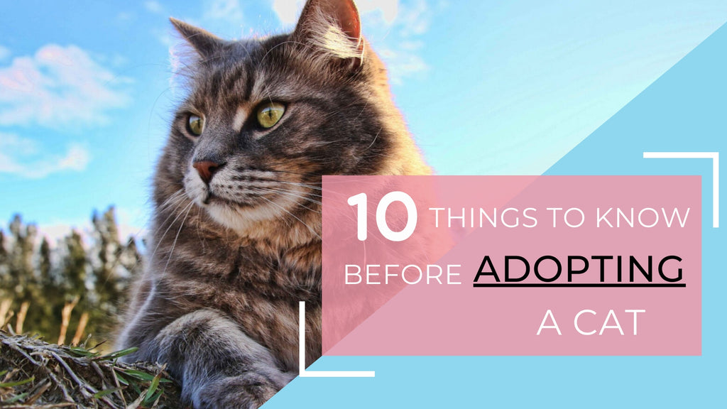 ViviPet | 10 Things To Know Before Adopting a Cat