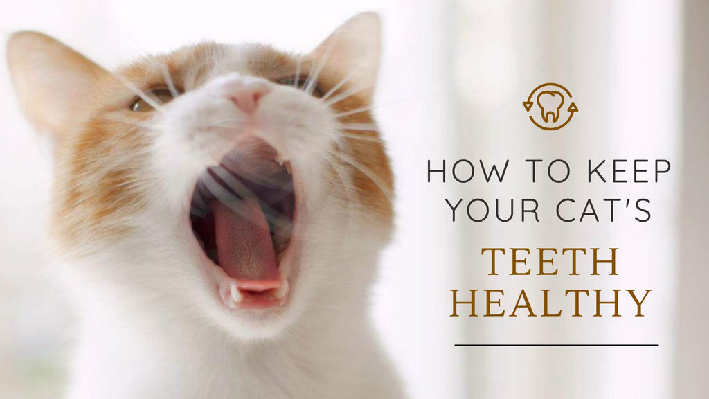 ViviPet | How to Keep Your Cat's Teeth Healthy 🦷