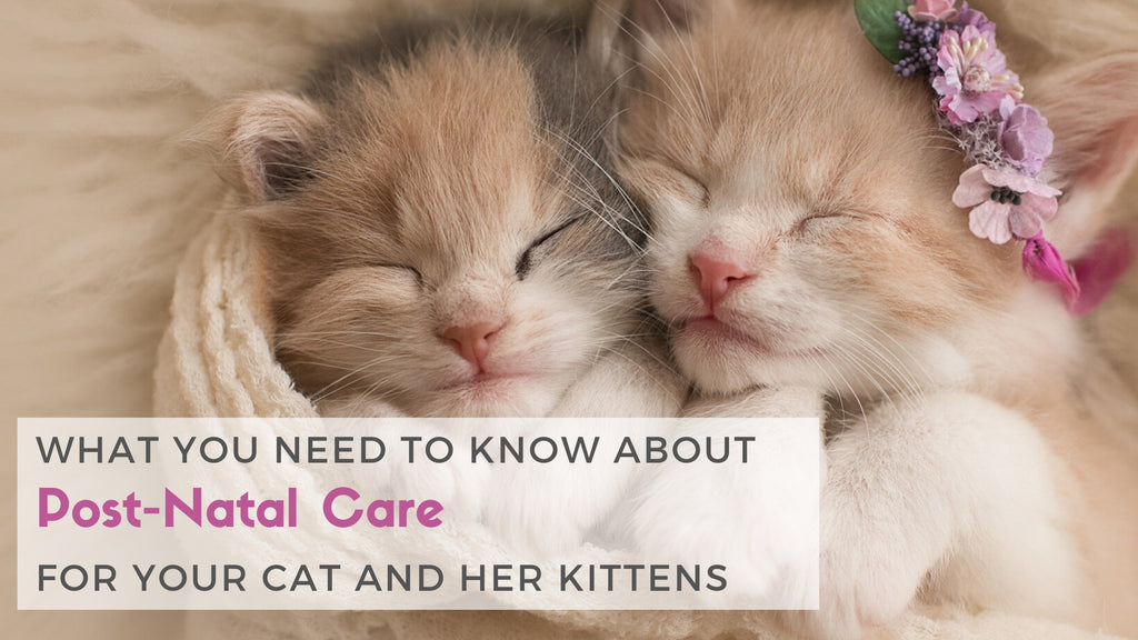 ViviPet | What You Need to Know About Post-Natal Care for Your Cat and Her Kittens