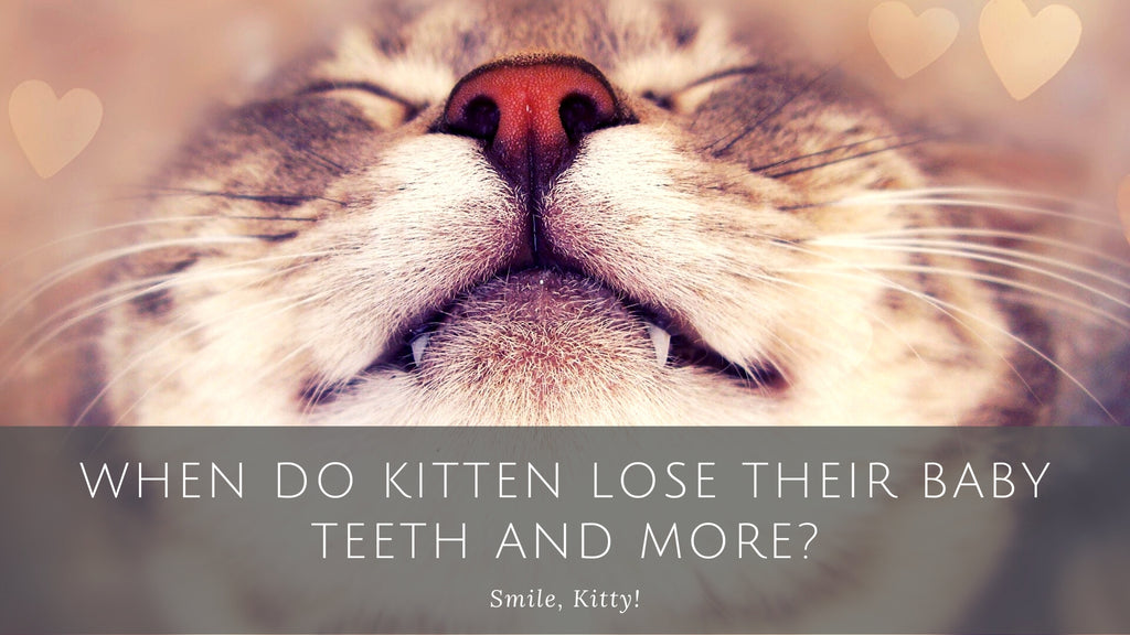 ViviPet | When Do Kitten Lose Their Baby Teeth and More?