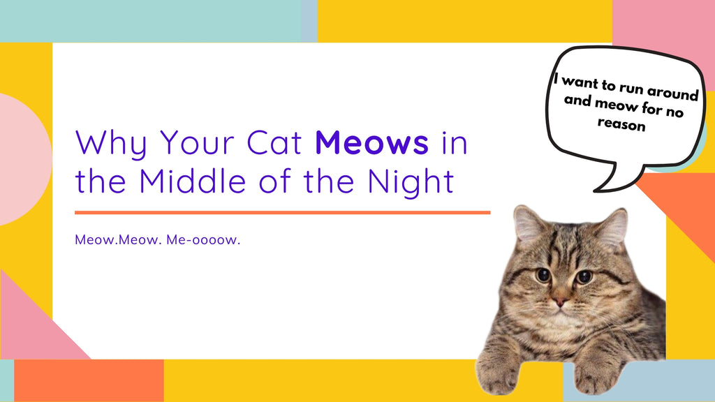 ViviPet | Why Your Cat Meows in the Middle of the Night