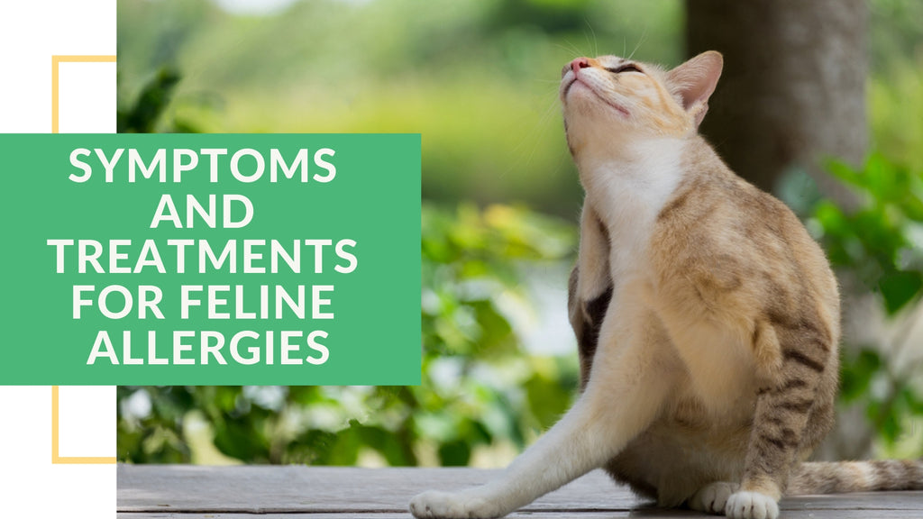 ViviPet | Symptoms and Treatments for Feline Allergies