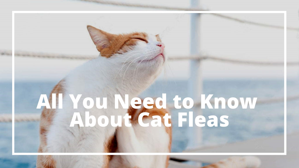ViviPet | All You Need to Know About Cat Fleas!