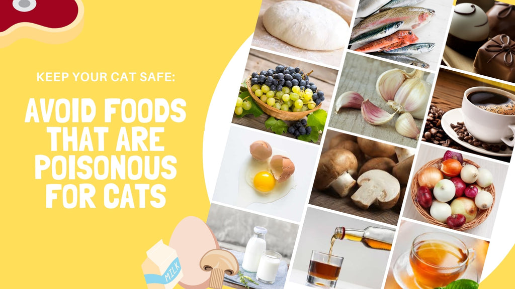 ViviPet | Keep Your Cat Safe: Avoid Foods that are Poisonous for Cats